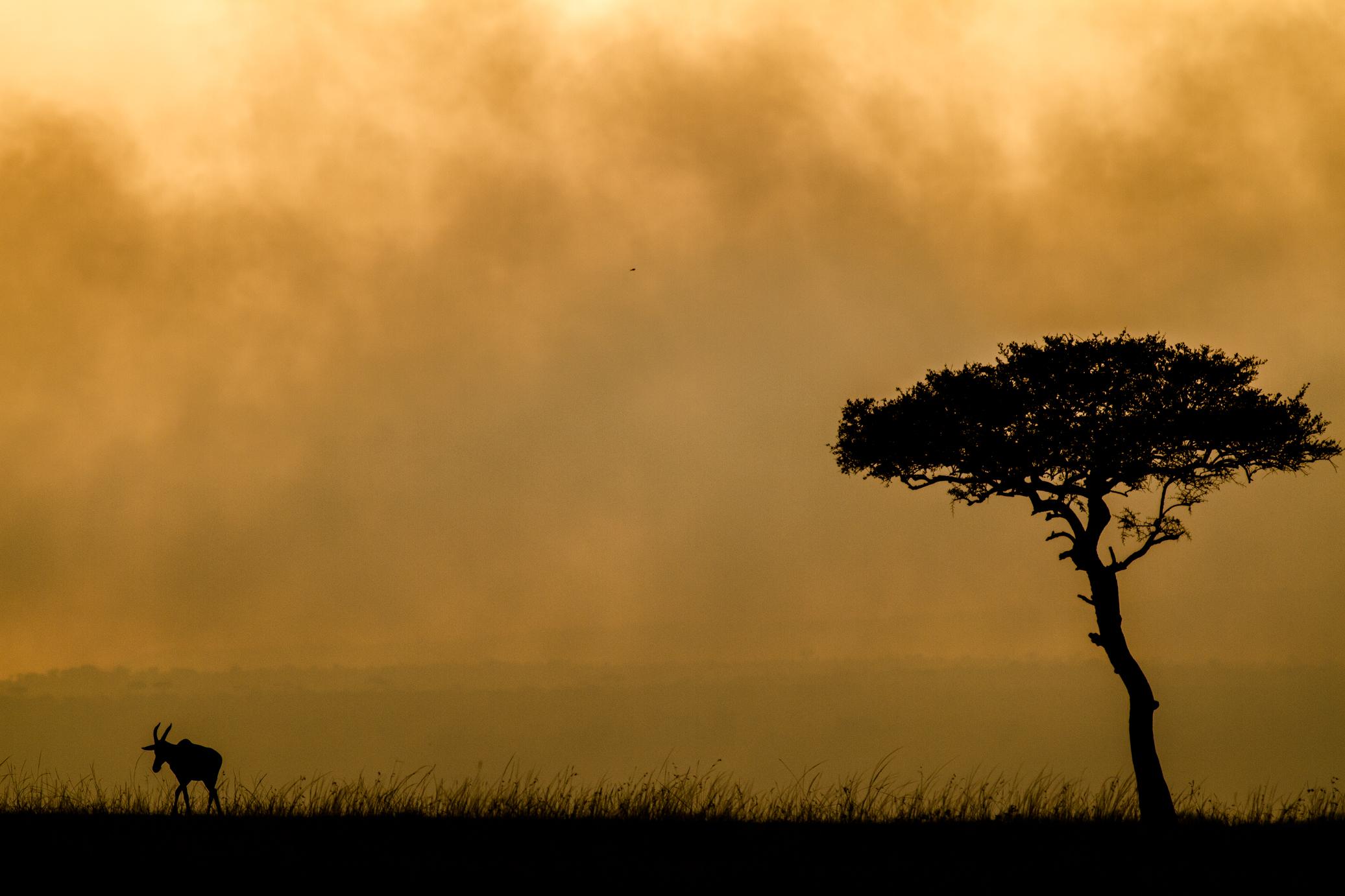 east african landscapes asilia africa