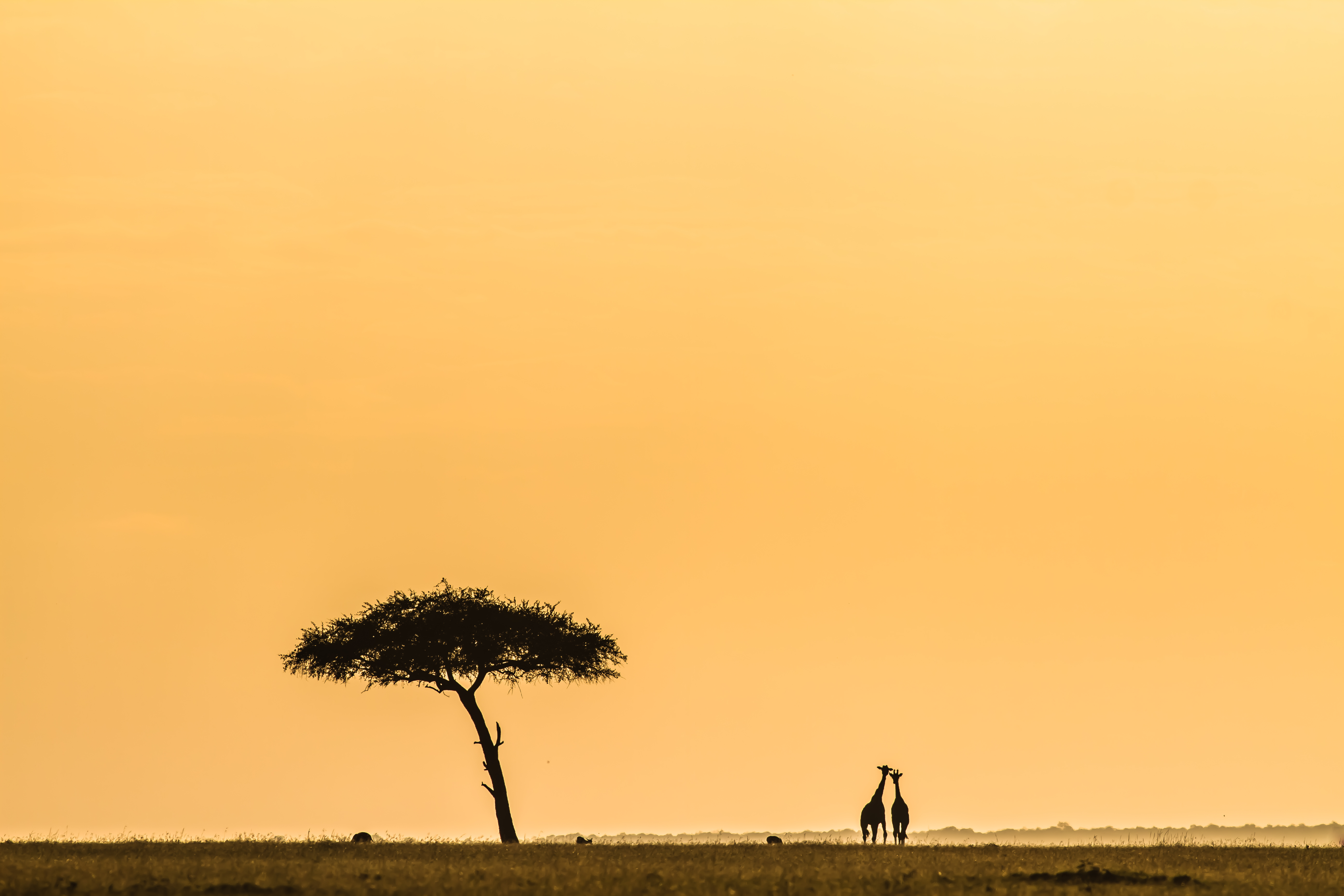East African Landscapes Asilia Africa