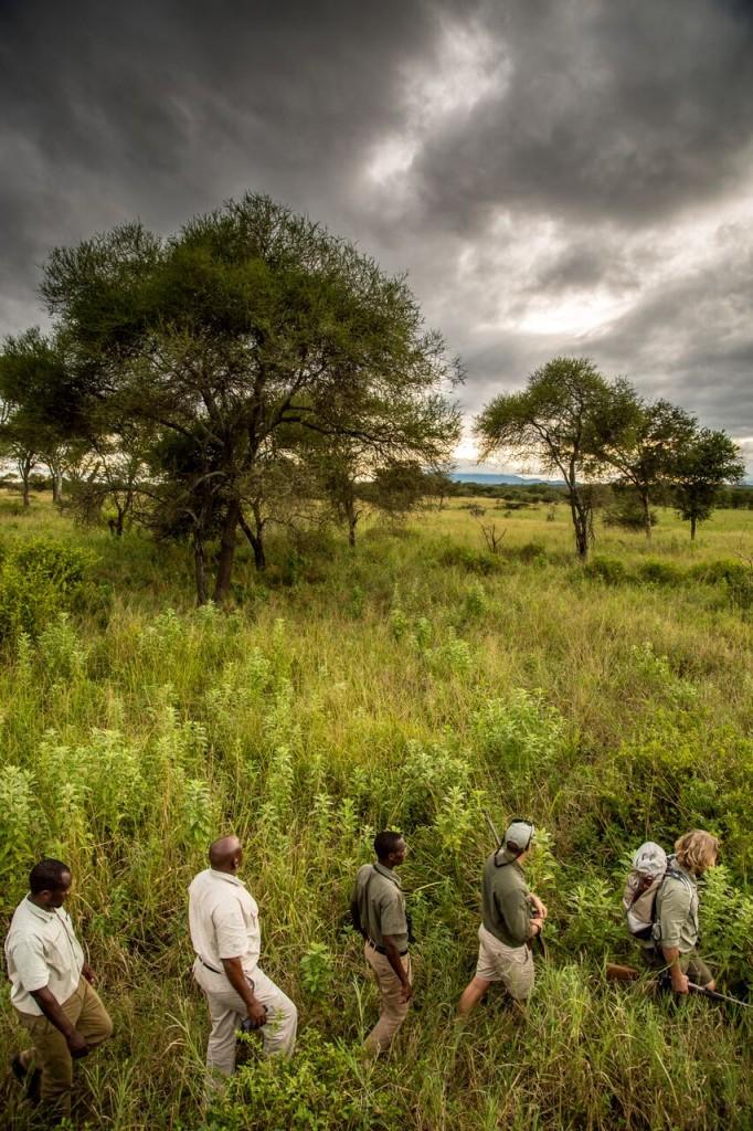 Walking Safari - Trees can Talk