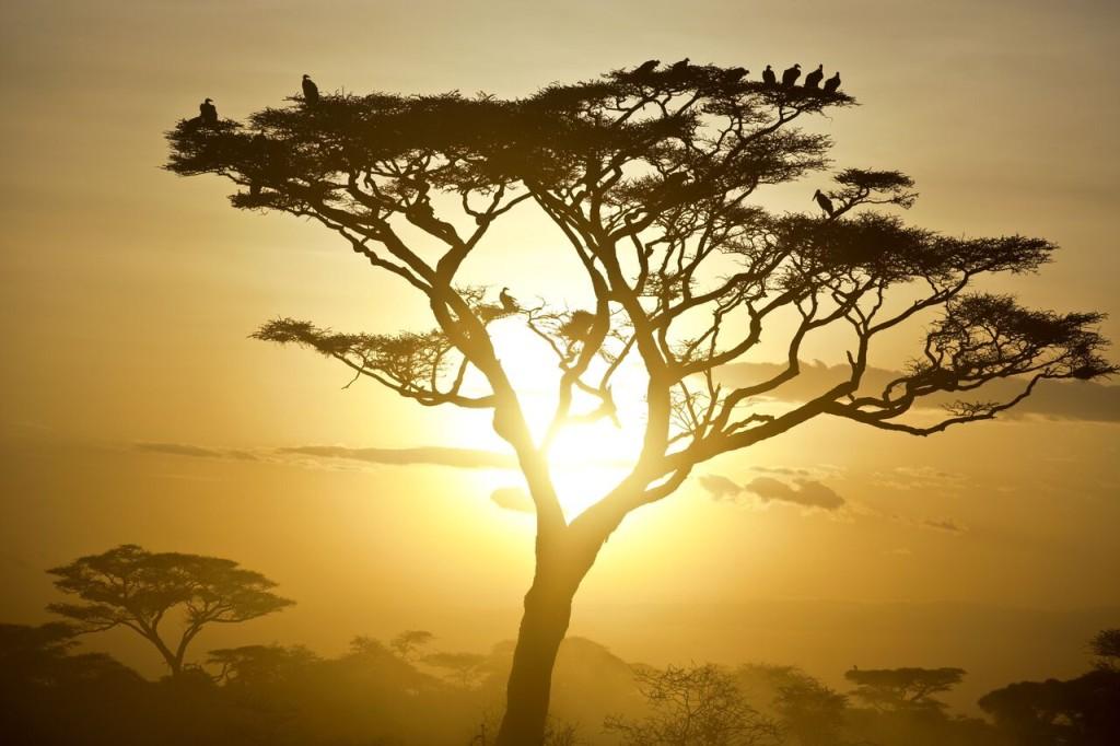 Night Drive Safari - Sunset