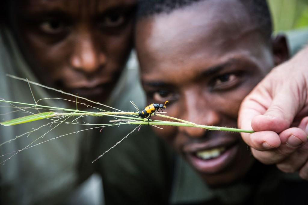 Walking Safari - Insect